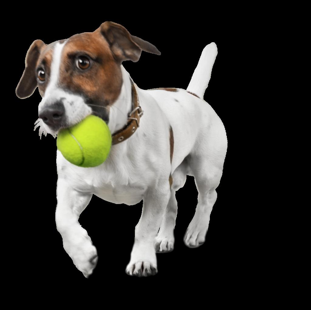 Hundeschule, auch für Gassigeher