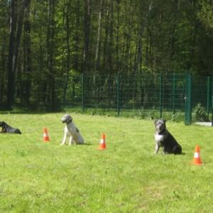 Neue Hundeauslaufgehege und Trainingswiese