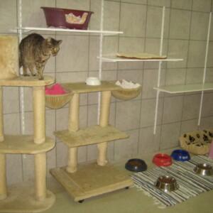 Katzen- Quarantänestation neu renoviert