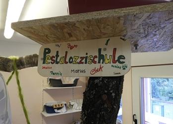 Schüler der Pestalozzischule bauten einen Katzenbaum für das Tierheim Fulda
