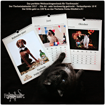 kalender_foto__zeitung