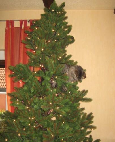 Tierische Weihnachtsgrüße.Tierische Weihnachtsgrüße Tierheim Fulda Hünfeld E V