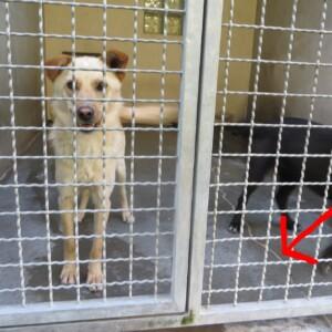 Geben Sie Ihre Stimme für unsere Tierheimbewohner ab!